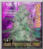 Mephisto Auto Skylar White Female 3 Weed Seeds